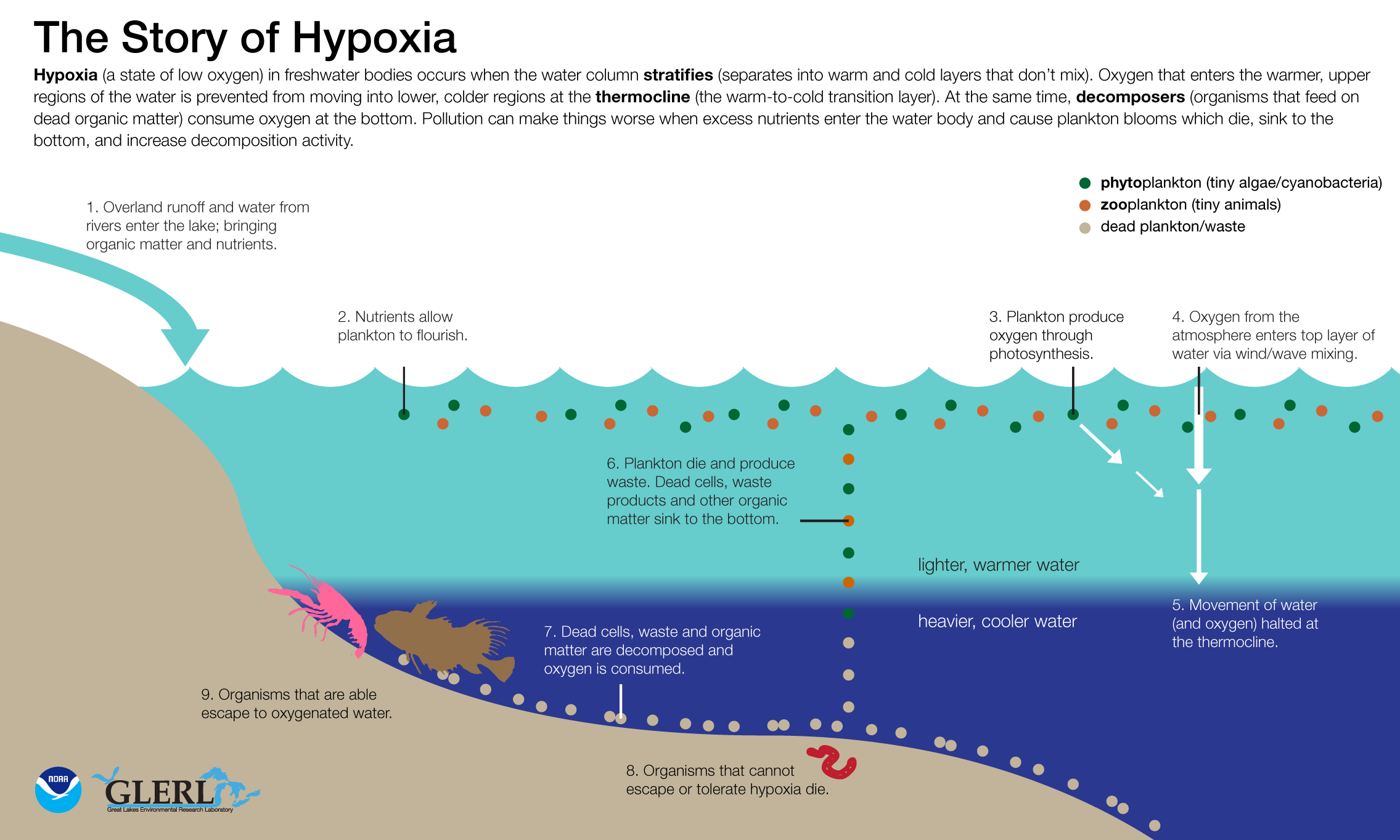 hypoxia | NOAA Great Lakes Environmental Research Laboratory