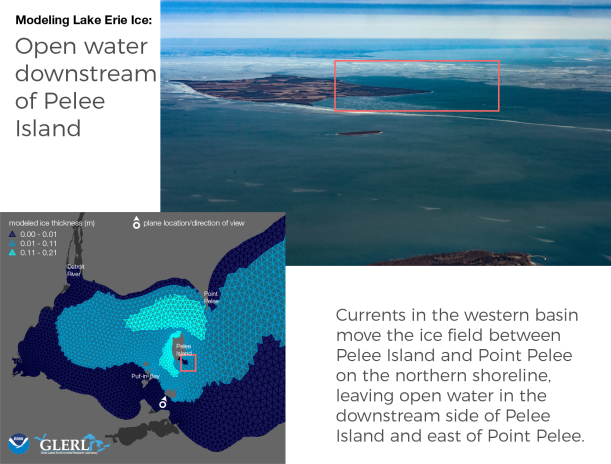 Open water downstream of Pelee Island: Currents in the western basin move the ice field between Pelee Island and Point Pelee on the northern shoreline, leaving open water in the downstream side of Pelee Island and east of Point Pelee.